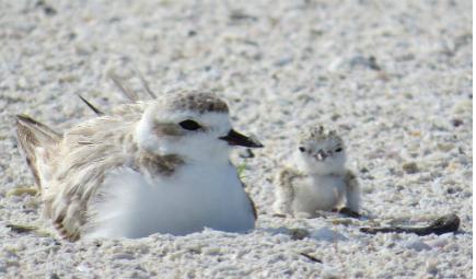 shorebirds-nesting-slider